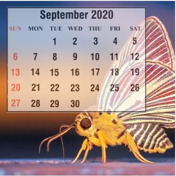 Cute September 2020 Calendar Layout