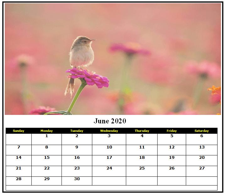 Cute June Calendar 2020