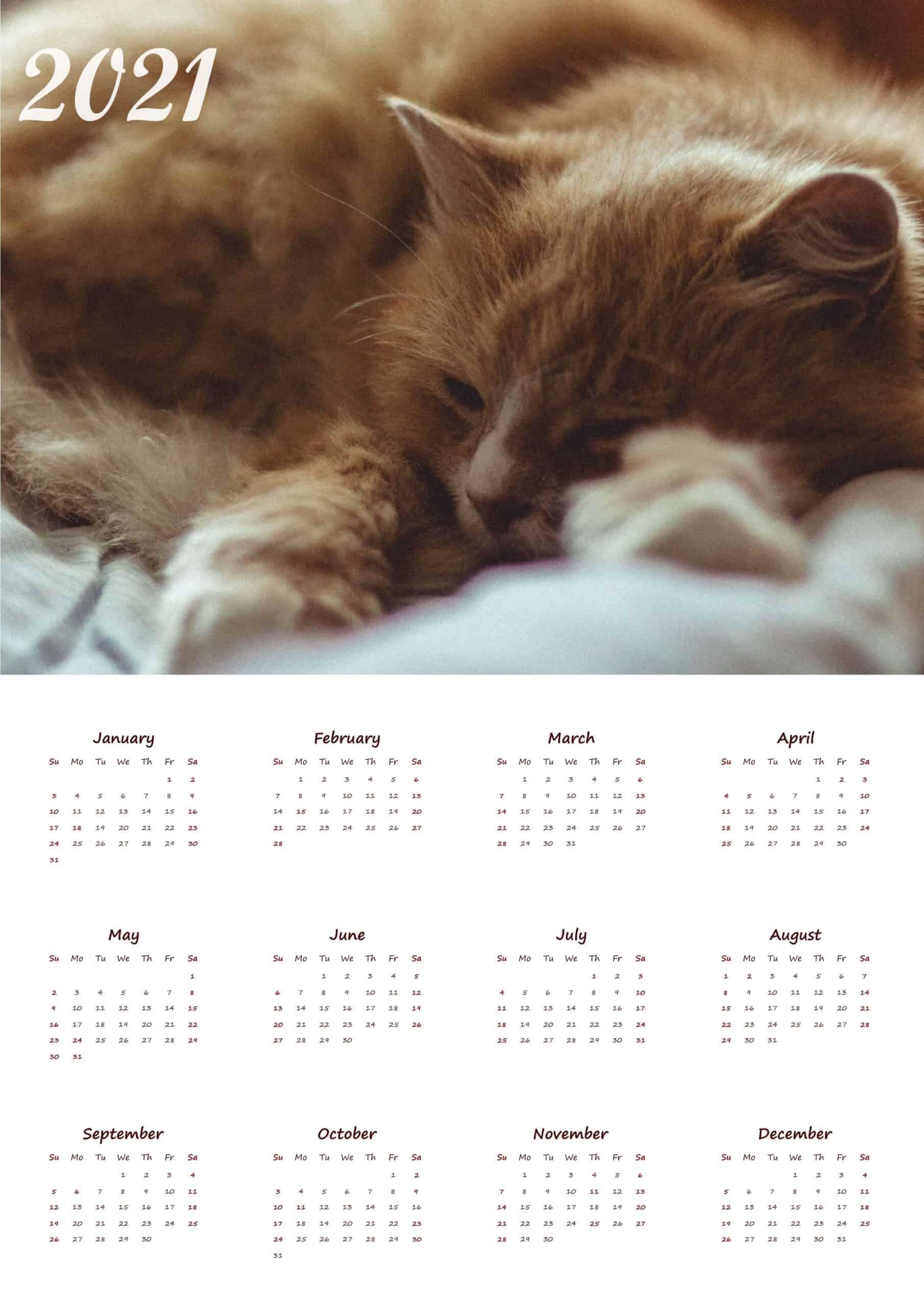 Cute cat calendar 2021